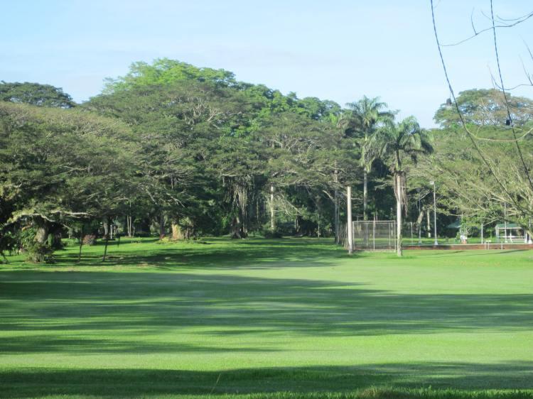 The famous Acacia Trees